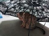 傘のジェー君.jpg